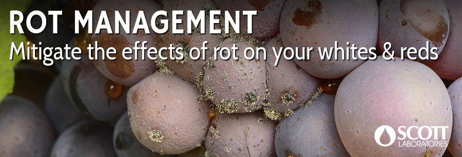 Rot Management in White & Red Varietals